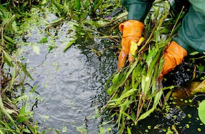 Pond Cleaning Llandudno (01492)